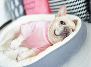 French Bulldog Bed