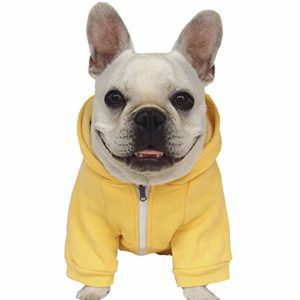 keep your french bulldog warm