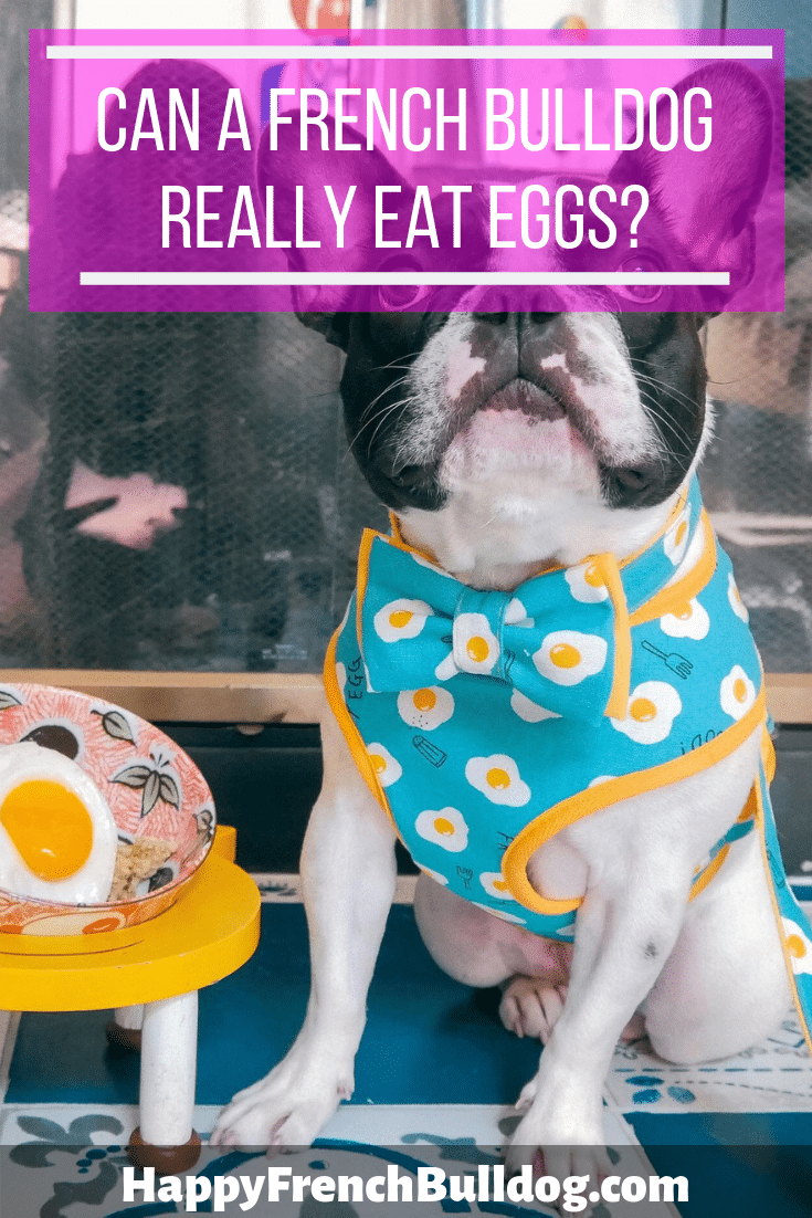 Can a French bulldog eat eggs?