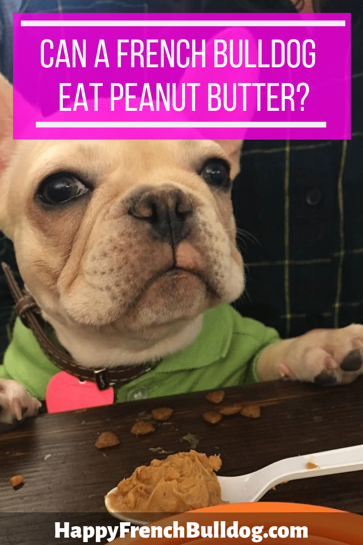 Can a French bulldog eat peanut butter?