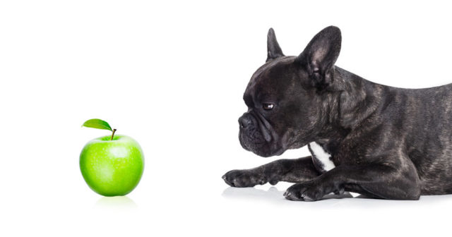 can a french bulldog eat apples