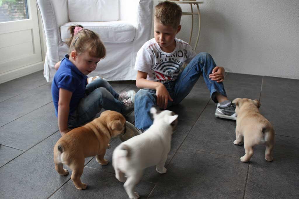 french bulldog and children