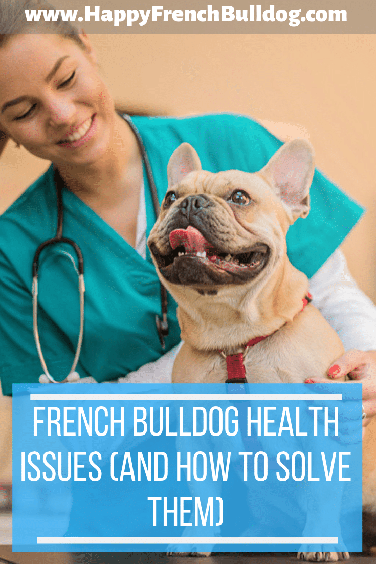 French bulldog health issues (and how to solve them)