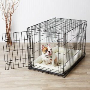French Bulldog Crate Training