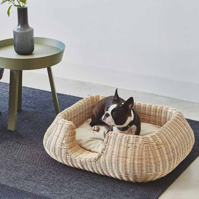 wicker basket french bulldog