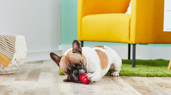 French Bulldog Kong recipes