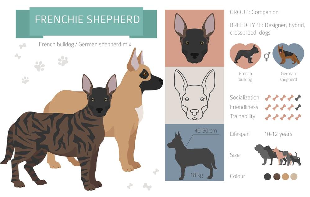 french bulldog german shepard mix