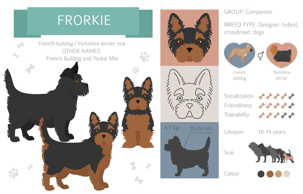 french bulldog yorkie mix